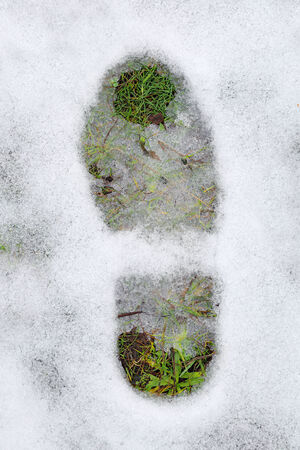 footprint and green grass under snow as abstract first spring steps photo