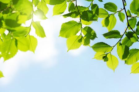 緑色の葉を新鮮さ春のシーズンと太陽で青い空に 写真素材 - 26957388