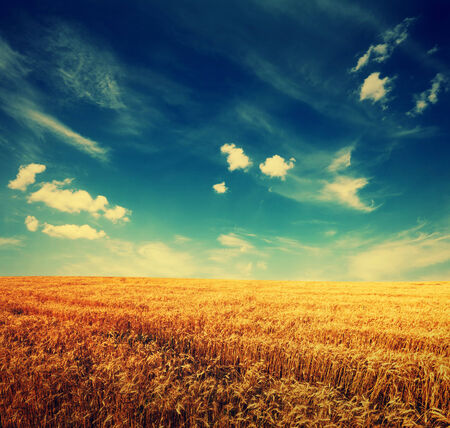wheat field and clouds on sky, summer landscape with retro colors photo