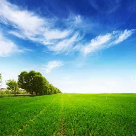 green field with trees and blue sky at summer time