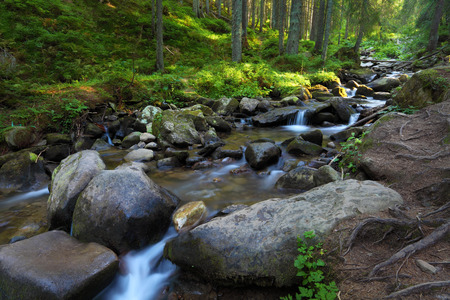 Forest and stream between big stones. Sunlight on green grass and moss. Carpathian landscape in summer season