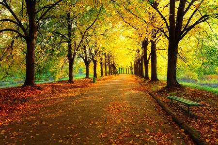 Jesień w parku miejskim. Kolorowe liście w promieni słonecznych. Puste ławki w pobliżu drzewa. Piękno przyrody sceny do jesieni