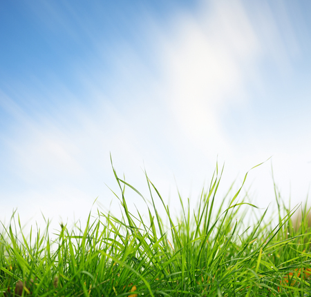 blurred motion: Green grass closeup with sky on background. Clouds in blurred motion due to long exposure