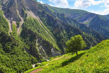 campo de flores: paisaje de verano de la montaña. Árbol verde en la ladera de la colina con pequeñas flores del campo