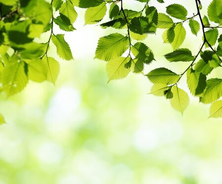 Green leaves in sunny spring day. Natural background with blurred bokeh. Selective focus