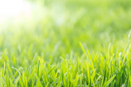 Fresh spring background, soft focus photo of fresh uncut green grass and sun light in early morning