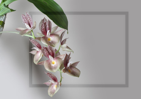 orchid flower frame on a gray background Stock Photo