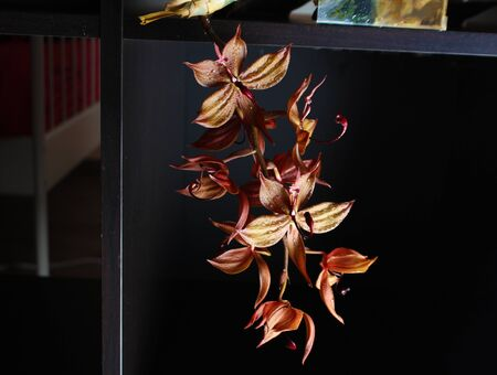orange orchid on a black background