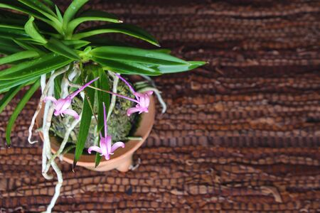 purple pink orchid, light background Stock Photo