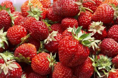 big amount of fresh and juicy strawberry photo