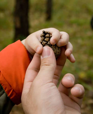 photo of father giving pine cone to child. There only hands and cone are visible photo