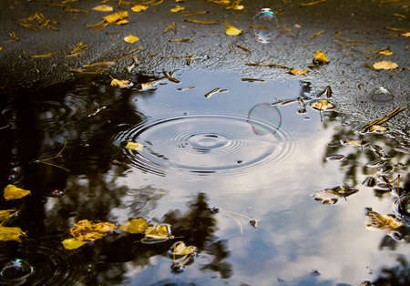 Photo of soap bubble under puddle.  Autumn, morning, cold. photo