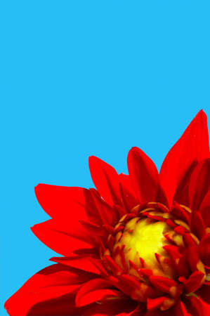 Red flower with blue sky on the background. Stock Photo - 1878353