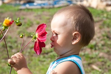 little boy smells flower of a dahlia in the afternoon