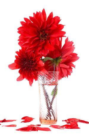 georgina: Red dahlias in  vase with water isolated on a white background Stock Photo