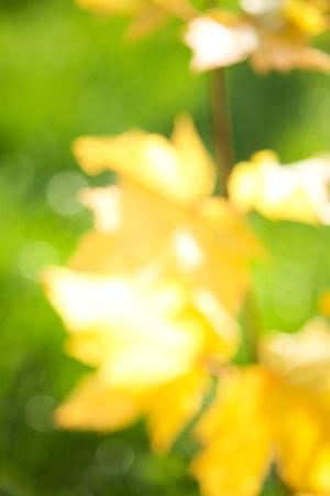 blurring: autumnal natural background blurring