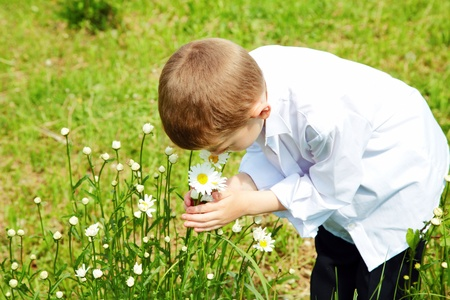 The boy holds hands flowers of a camomile in the afternoon photo