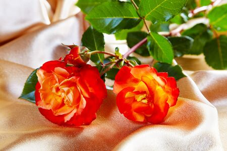 Rose rosse su un tessuto d'oro photo
