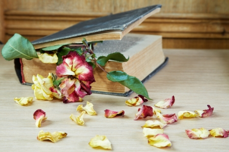 Dry rose and the old book on a table
