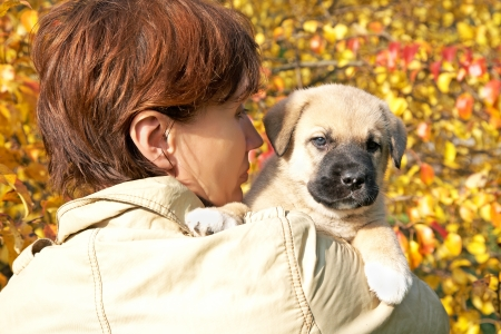 The woman with a puppy in hands against autumn leaves 写真素材