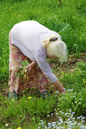 65 70 years: The grandmother tears a grass in a garden in the spring