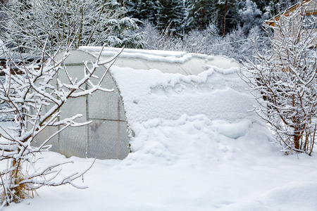 hothouse: Hothouse brought by snow in the winter
