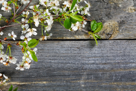 floral arrangement: Branches of a cherry  on an old table