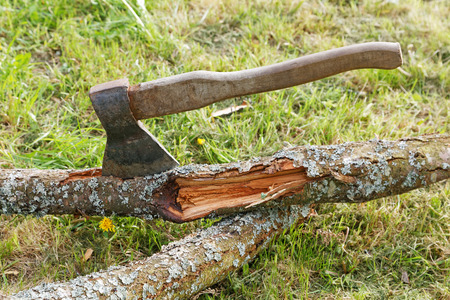 filings: ax and branches of old trees on the grass