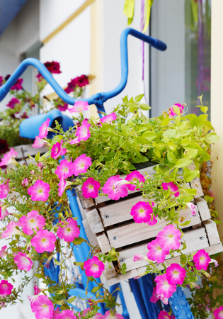 old bicycle with flowers box in summer