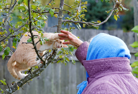 The kitten bites a hand of the old woman