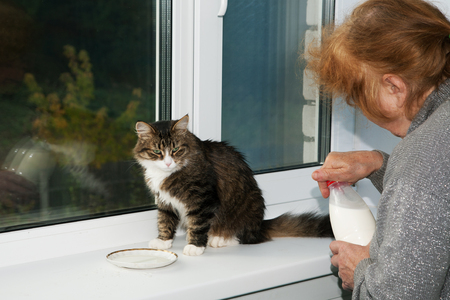 old woman is feeding a cat milk from a saucer