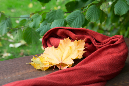 red scarf and yellow maple leaves on a table in autumn