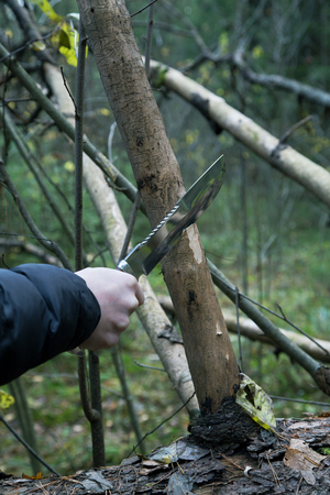 mans hand with a hunting knife cuts a tree branch