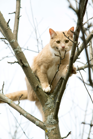 red cat sits on a tree in spring afternoon