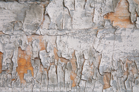 wood texture with pieces of white and gray paint 写真素材