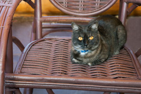 black cat sits in a wicker rocking chair