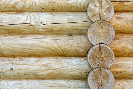 texture of large pine logs yellow color close up