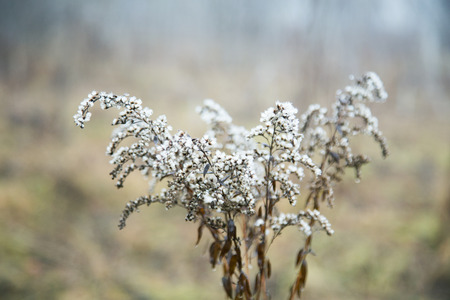 autumn plant in the fog with a small depth of field