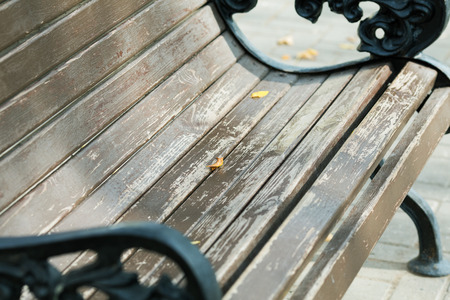 outdoor bench with yellow leaves close-up in autumn 写真素材