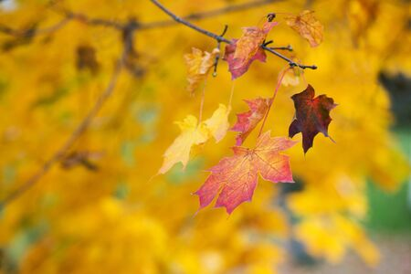 Abstraction of yellow leaves on an autumn day on a blurred background 写真素材 - 132070386