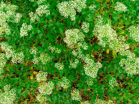 Spring weather leaves and flowers open. Green texture of natural flora Stockfoto