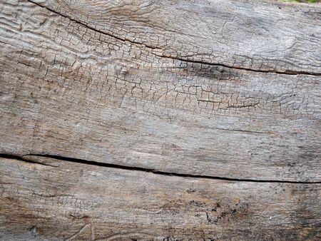 Tree bark texture for background Stockfoto
