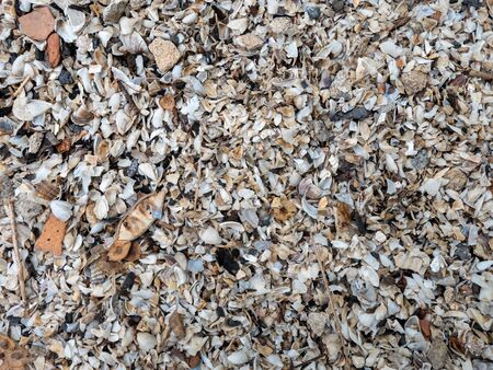 The texture of small shells on the river bank. Background of the shore near the river Stockfoto