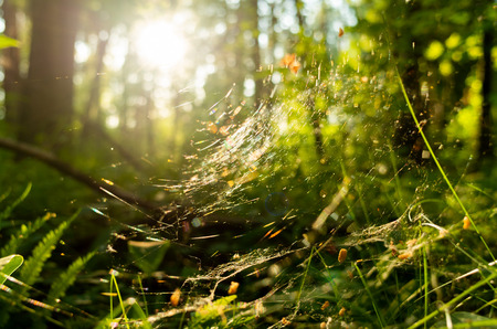 Bright sunlight through thin cobweb 写真素材