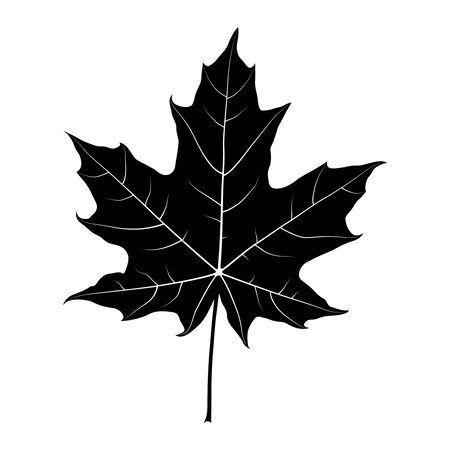 Maple leaf black silhouette isolated on white background. Vector Çizim