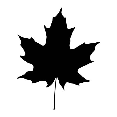 Maple leaf black silhouette isolated on white background. Vector  イラスト・ベクター素材