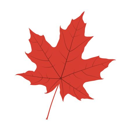 Canadian maple leaf silhouette isolated on white background. Vector