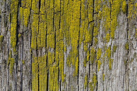 Moss and mold affect a wood board