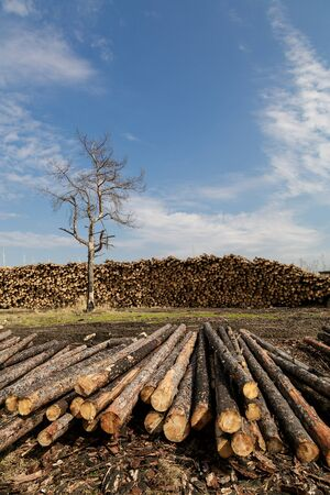 Dead tree on a background of a stack of firewood