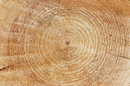 duramen: Heartwood texture background, cut log